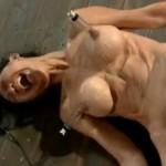 拘束してフィストファックで大絶叫する女性【無修正】
